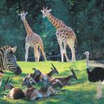 La plaine africaine du Zoo d'Amnéville